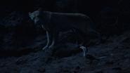 Lionking2019-animationscreencaps.com-7671