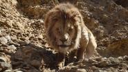 Lionking2019-animationscreencaps.com-4830