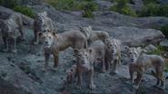 Lionking2019-animationscreencaps.com-5829