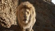 Lionking2019-animationscreencaps.com-4849