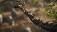 Lionking2019-animationscreencaps.com-134