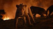 Lionking2019-animationscreencaps.com-11774