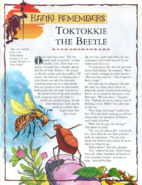 Toktokkie the Beetle 1