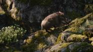 Lionking2019-animationscreencaps.com-9075