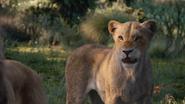 Lionking2019-animationscreencaps.com-9786