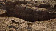 Lionking2019-animationscreencaps.com-10597