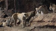 Lionking2019-animationscreencaps.com-7269