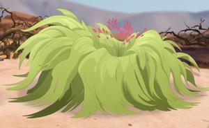 Tamboa plant