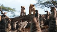 Lionking2019-animationscreencaps.com-2573