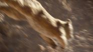 Lionking2019-animationscreencaps.com-4724