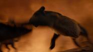 Lionking2019-animationscreencaps.com-11930