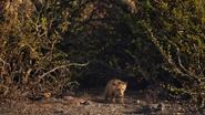 Lionking2019-animationscreencaps.com-5679