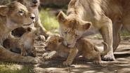 Lionking2019-animationscreencaps.com-2041