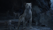 Lionking2019-animationscreencaps.com-11233
