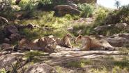 Lionking2019-animationscreencaps.com-2017