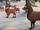 Kiril's herd