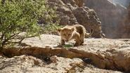 Lionking2019-animationscreencaps.com-4547