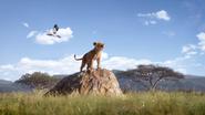 Lionking2019-animationscreencaps.com-2361