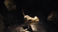 Lionking2019-animationscreencaps.com-3247