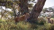 Lionking2019-animationscreencaps.com-2342