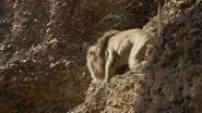 Lionking2019-animationscreencaps.com-4833