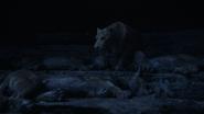 Lionking2019-animationscreencaps.com-7527