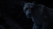 Lionking2019-animationscreencaps.com-7543