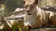 Lionking2019-animationscreencaps.com-2083
