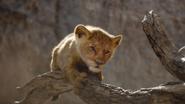 Lionking2019-animationscreencaps.com-4890