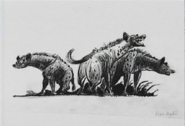 Hyenaconcepts