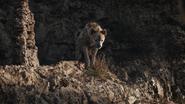 Lionking2019-animationscreencaps.com-3383