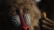 Lionking2019-animationscreencaps.com-8768