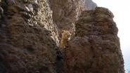 Lionking2019-animationscreencaps.com-5019