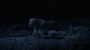 Lionking2019-animationscreencaps.com-7532