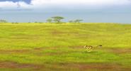 Runalonggrass