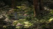 Lionking2019-animationscreencaps.com-9032