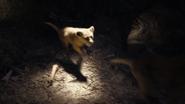 Lionking2019-animationscreencaps.com-3248