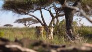 Lionking2019-animationscreencaps.com-2693
