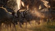 Lionking2019-animationscreencaps.com-441