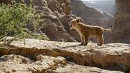 Lionking2019-animationscreencaps.com-4511