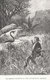 Stevenson Ile au trésor Georges Roux 1885 12