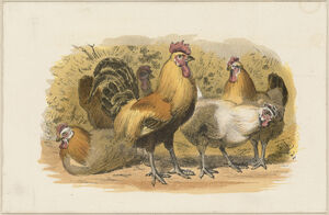 HensAndRooster19thCentury