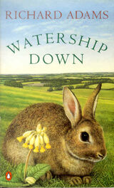 Watership-down1