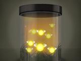 Банка со светлячками