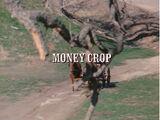 Episode 122: Money Crop