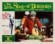 The Little Shop of Horrors Lobby Card 04 - Jonathan Haze