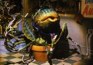 Little Shop of Horrors (1986) - Audrey II sings Feed Me