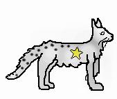 Spottedstar.leader
