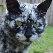 Animal Cat175
