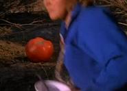 Tomato21